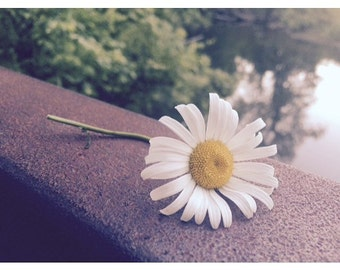 Photograph I took of a beautiful Daisy that was left by a fellow hiker . 8x10 print