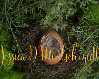 NEWBORN DIGITAL BACKDROP: Brown Egg Backdrop in Real Bird Nest