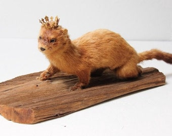 taxidermied mink with crown