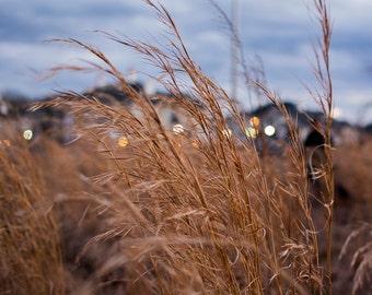 Field Grass at Dusk
