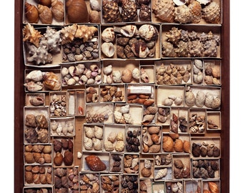 Drawer #28 - The Read Family Shell Collection