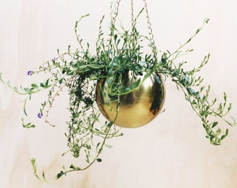 Gold Brass Hanging Planter - Air Plant Climbers Succulent Indoor Pot
