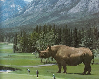 Limited Edition Print - Brian, There's a Bloody Great Rhino on the Fairway Collage