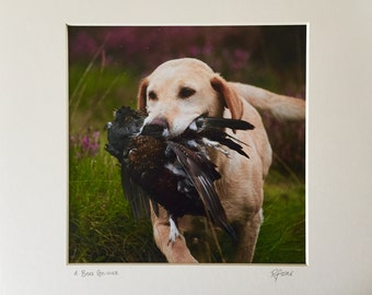 A Brace Retrieved - Photographic Print