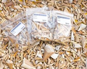 Bag of fossil Sharks Teeth (Approx 30 teeth) [FS9118]