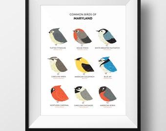 Common Birds of Maryland Art Print