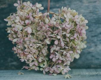 Fine Art Photograph, Hydrangea Flowers, Heart, Flower Photo, Bluish Grey, Still Life, Botanical Print, Whimsical Art, Home Decor, 4x6 Print