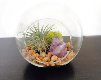 Glass Terrarium With Air Plant and Amethyst