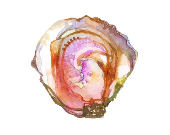 "Watercolor Oyster - Limited Edition 8"" x 8"" Print"
