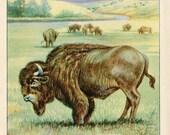 PRINT SALE 20% OFF Vintage 1926 North American Animals  Original Bookplate Illustration, Print, the Bison, Buffalo, Woodland Animals, Natura