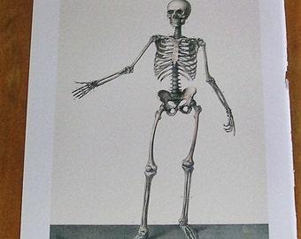 Antique Vintage Anatomy Book Page of the Skeleton Anatomical Diagram Human Skeleton