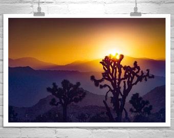 Joshua Tree, Sunset Photography, Desert Southwest Art, Desert Landscape, Mojave Desert, Sunset Art, Fine Art Photography, Nature Photography