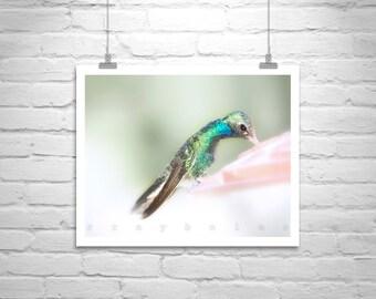 Hummingbird Art, Wall Picture, Bird Photography, Spring Green, Wildlife Print, MurrayBolesta, Fine Art Photography, 8 x 10, 11 x 14