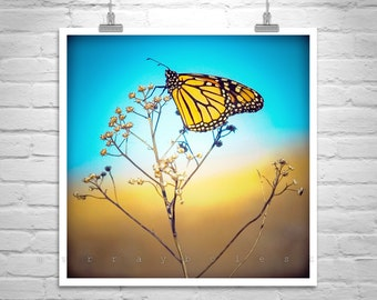 Monarch Butterfly, Nature Photography Butterfly Photograph, Insect Art, Square Print, Square Art, 5 x 5, 8 x 8