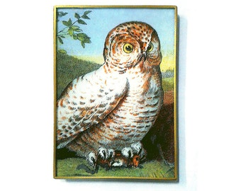 Snowy Owl decoupage glass catch-all tray