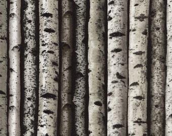 Birch Trees Fabric - Timeless Treasures - C3572