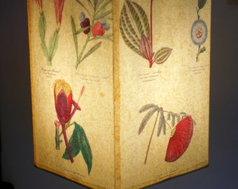 Unique lamp shade inspired by hand coloured botanical etchings