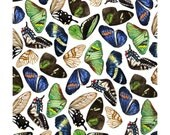 Butterfly Wing A3 watercolour print