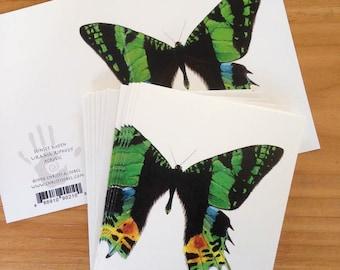 6 blank cards - Sunset Moth