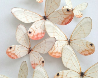 NEW blush butterflies - 3D decorative butterflies - 3D wall decoration - pastel peach butterfly - 3D butterflies wall art - Uniqdots on Etsy