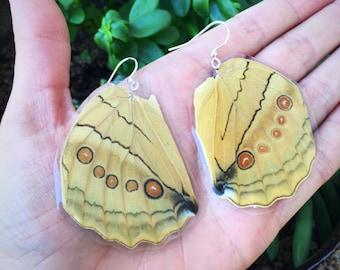 Golden Owl Moth Earrings, Large Butterfly Wing Earrings, Insect Jewelry, Real Butterfly wing earrings, Bohemian boho gypsy BW044