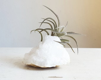 Boho Airplant Display, Crystal Garden, Calcite Geode,  Palm Sized, Minimalist, Gift For Friend, White Crystal, Air Plant