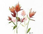 Indian Paintbrush - Original Pen & Ink Watercolor