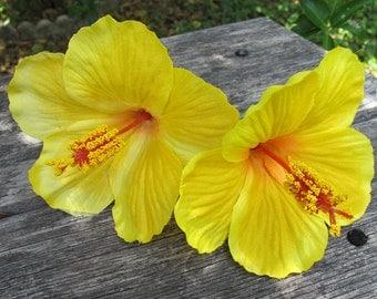 2 - Tropical Hawaiian YELLOW Hibiscus hair pin flower  - weddings-