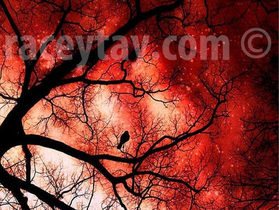 Surreal Halloween Art in Orange Red Black - Large Wall Art- Spooky Fall Trees- Nature Photography