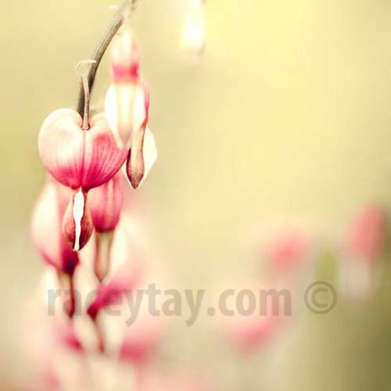 Pink Flower Photos, Yellow, Pink, Pastel, Girl Nursery Decor, Shabby Chic Wall Art, Bleeding Hearts, Spring Art