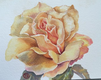 Rose, Original watercolor painting