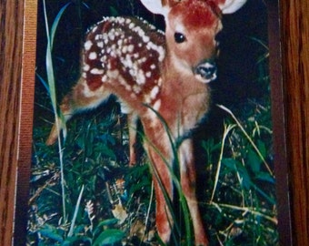 Vintage Deer Fawn Postcard Hohenwald, TN made in America