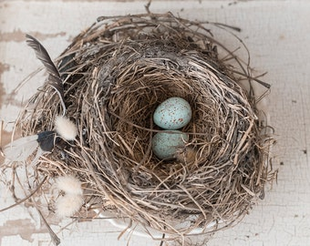 nest in spring -nest photography springtime photo-garden photography -birds nest (5 x 7 Original fine art photography prints) FREE Shipping)