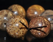 6 Pieces 14mm ***Excellent Quality~Petrified Fossil PALM WOOD Large Round Beads - F1022