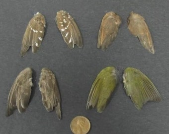 4 Pairs of Finch Dried Birds Wings Feathers Art Craft Taxidermy Green Spotted etc