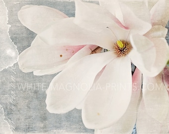 WHITE MAGNOLIA II Fine Art Print, fine art photography, wall decor, Wall Decor Large Print, Magnolia Photography, Magnolia Art Print