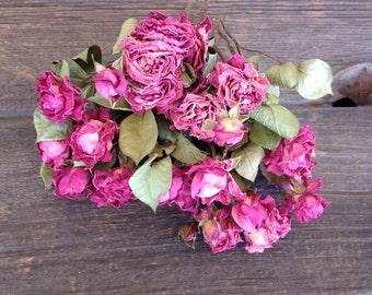 Pink Spray Roses