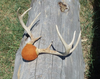 Deer antler mount