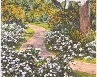 Cypress Gardens, Florida, Gardenia - Linen Postcard - Unused (A6)