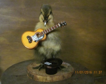 Taxidermy duckling Mr Busker the street performer