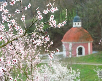 Pink chapel at Petrin hill, Prague photography, Landscape print, Cherry blossom art, Dining room wall art, Prague print, Spring impressions