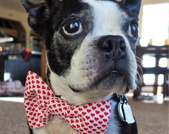Dog Bow Tie:  Valentine's Day Dog Bow Tie - Little Red Hearts