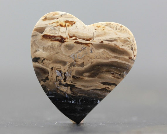 Heart Petrified Palm Wood Root Fossil 100 Million Year Old
