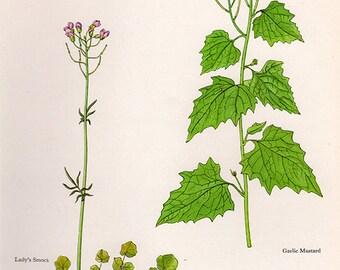 ANTIQUE BOTANICAL PRINT flowers and plants 34