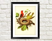 BIRDS With NEST PRINT Vintage Nesting Birds Art Illustration Wall Hanging (A4  A3 Size)