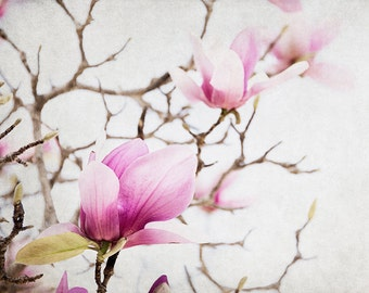 Floral Photography, Magnolia Art Print, Pink Flower Artwork, Botanical Picture, Shabby Chic Bedroom Decor For Her, Nature Wall Art