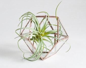 Glass Planter, Terrarium, stained glass planter geometric 3D shape, polyhedron, triangular orthobicupola, diamond shape plant holder