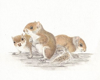Squirrels,  8x10 original watercolor painting, art & collectibles, squirrel, earthspalette