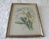 Vintage Paul de Longpre Original Whte Orchids Watercolor Print, Signed By Artist, French Realist Painter, N.Y.G.S, Circa 1925