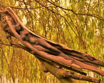 A Thousand Forests Within, Woman and Wood, Driftwood Sculpture byShapingSpirit
